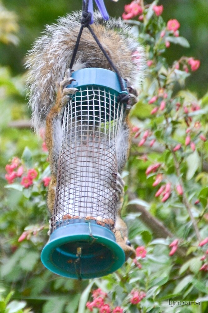 Bird Feeder With Claws And Tail by lynn carter