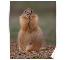 Prairie Dog with Funny Expression Poster