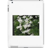 Pretty White Spirea Blossoms iPad Case/Skin