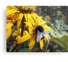 Beautiful Bumble Bee Metal Print