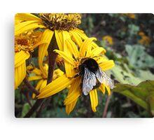 Beautiful Bumble Bee Canvas Print