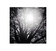 Tree of Knowledge with Sun Beaming Thru Photographic Print
