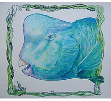 Bump Headed Parrot Fish Head Study Photographic Print
