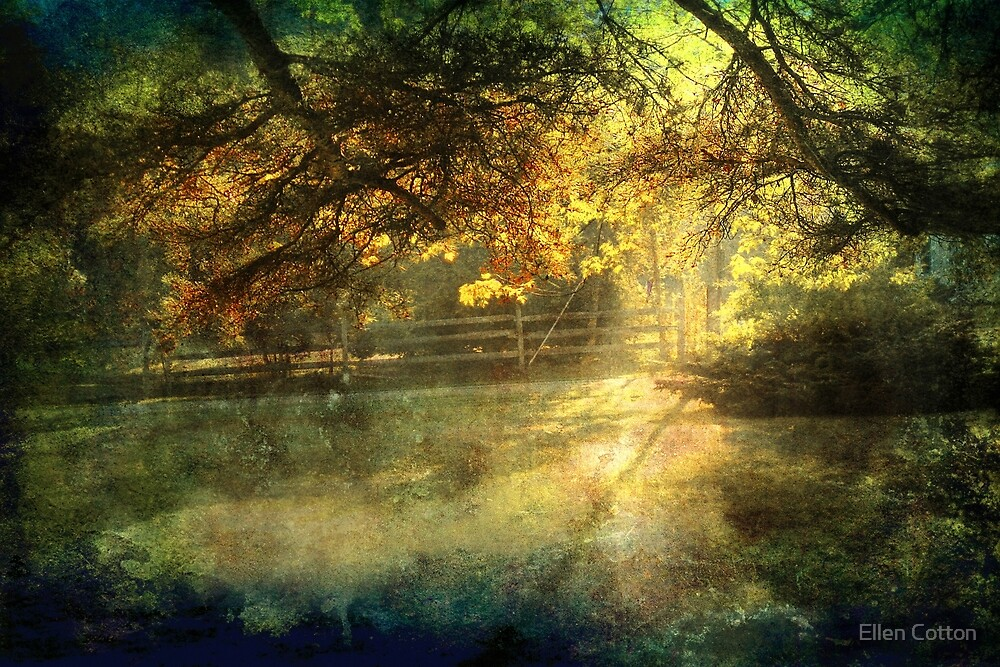 Autumn Light by Ellen Cotton