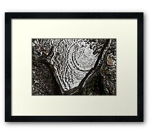 Rain Root Framed Print