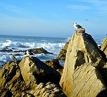 King of The Rock by colbygray15