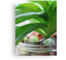 Backlit Succulent Canvas Print
