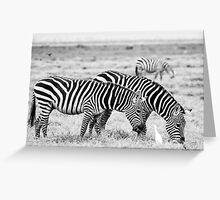 Three Zebras - Masai Mara, Kenya Greeting Card