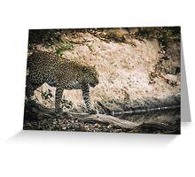 Mother Jaguar - Masai Mara, Kenya Greeting Card