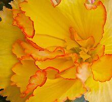 Bewitching Begonia by John Butler