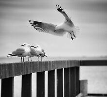 Landing by Craig Hender