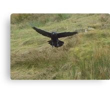 The Raven in Flight Canvas Print
