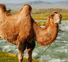 Camel Amidst Yellow Flowers Sticker