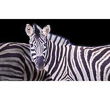 Real B&W Zebra Photographic Print