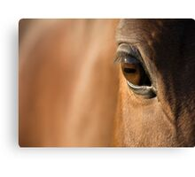 Reflections Of A Stallion's Soul  Canvas Print