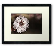 Blossoming Delight Framed Print