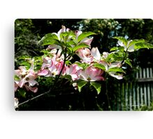 Springtime Blooming Dogwood Canvas Print