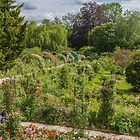 Monet's Garden #3, Giverny, France by Elaine Teague