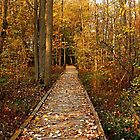 Fall Walk by Debbie Oppermann