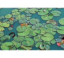 Tranquil green waterlily pads Photographic Print