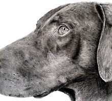 Pencil drawing of Zak the rescue doberman by rayemond