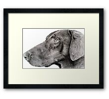Pencil drawing of Zak the rescue doberman Framed Print