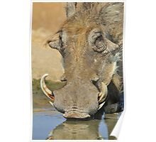 Warthog Pleasure - Quench of Life and Joy Poster