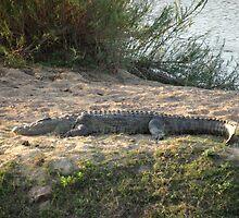 Crocodile Enjoying the Sun by Hermien Pellissier