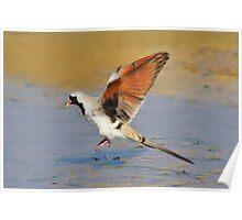 Blur of Flight - Namaqua Dove - African Wildlife Poster