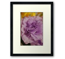 Lilac Love Framed Print