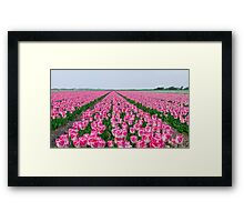 Field of White and Pink Tulips Framed Print