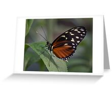 Macro Orange and Black Butterfly Greeting Card