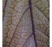 Leaf Texture Photographic Print