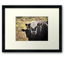 Cute Cows Framed Print