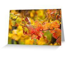 Autumn at the Vineyard Greeting Card