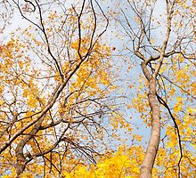 Yellow autumn leaves on trees by Arletta Cwalina