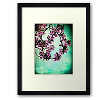 As blossoms bloom Framed Print