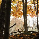 Robin in the Woods in Autumn by TrendleEllwood