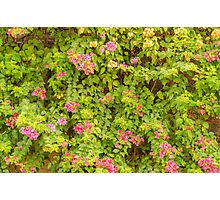 Wall of Colors Photographic Print
