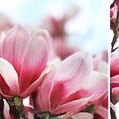 My Magnolia - diptych by Jo Williams