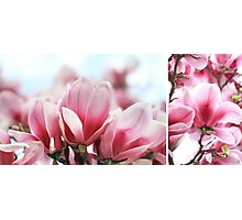 My Magnolia - diptych Photographic Print