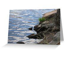Lake-shore Ripples Greeting Card