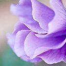 Sweet shades of Purple by Jo Williams