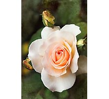 a perfect bloom Photographic Print