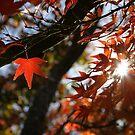 Autumn by Jo Williams