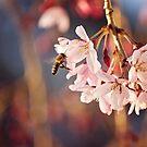 Spring Flight by Jo Williams