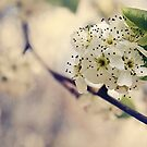 Vintage Blossom by Jo Williams