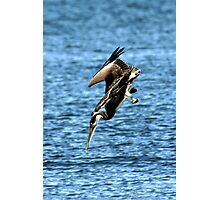 DIVING BROWN PELICAN Photographic Print