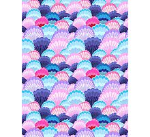 Multicolored pattern of seashells Photographic Print