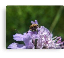 Tribu d'insectes profitant du soleil - Photo n°3 Canvas Print
